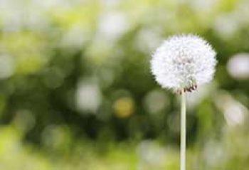 Allergy & Sinus Relief Add -On