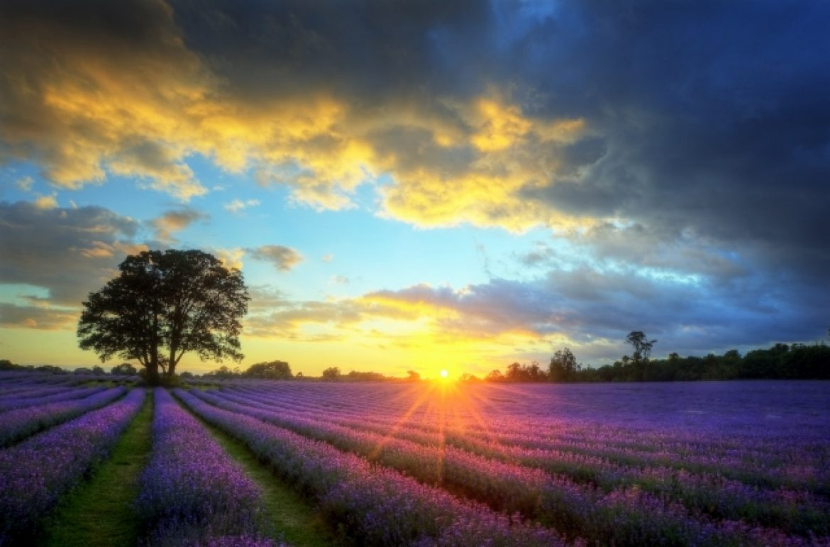 Lavender Dreams for Two